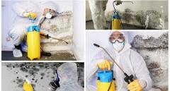 Уничтожение грибка / Eliminare si prevenire ciupercile de mucegai