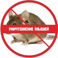 Уничтожение мышей / Combaterea soarecilor