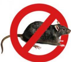 Уничтожение крыс профессиональное