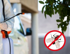 Уничтожение мух / Combaterea mustelor