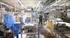 Дезинфекция птицефабрик / Dezinfecția fabricilor avicole