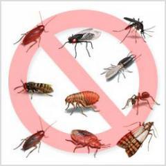 Санитарная обработка от насекомых / Igienizare de insecte