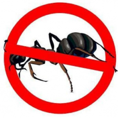 Обработка от муравьев / Nimicirea furnicilor