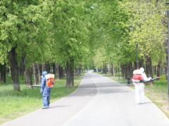 Обработка парковых зон от насекомых / Combaterea insectelor