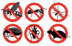 Потравить насекомых в доме, подвале и т.д.